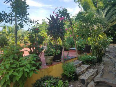 6-garden2